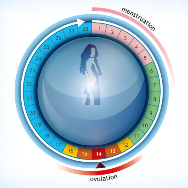 Cycle menstruel et ovulation